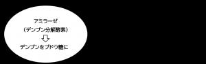 麹 麹菌 アミラーゼ デンプン分解酵素 黒甘麹